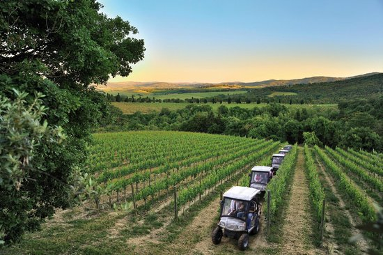 monte-vibiano-vineyard.jpg