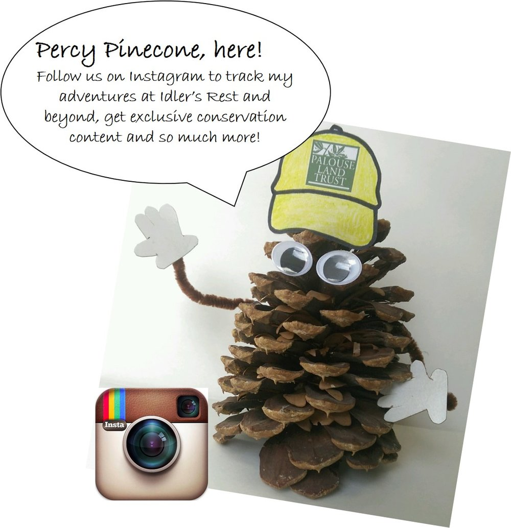 Howdy from Percy Pinecone, official Idler's Rest spokes-cone! Follow my adventures at the preserve and much more on our Instagram account, @PalouseLT.