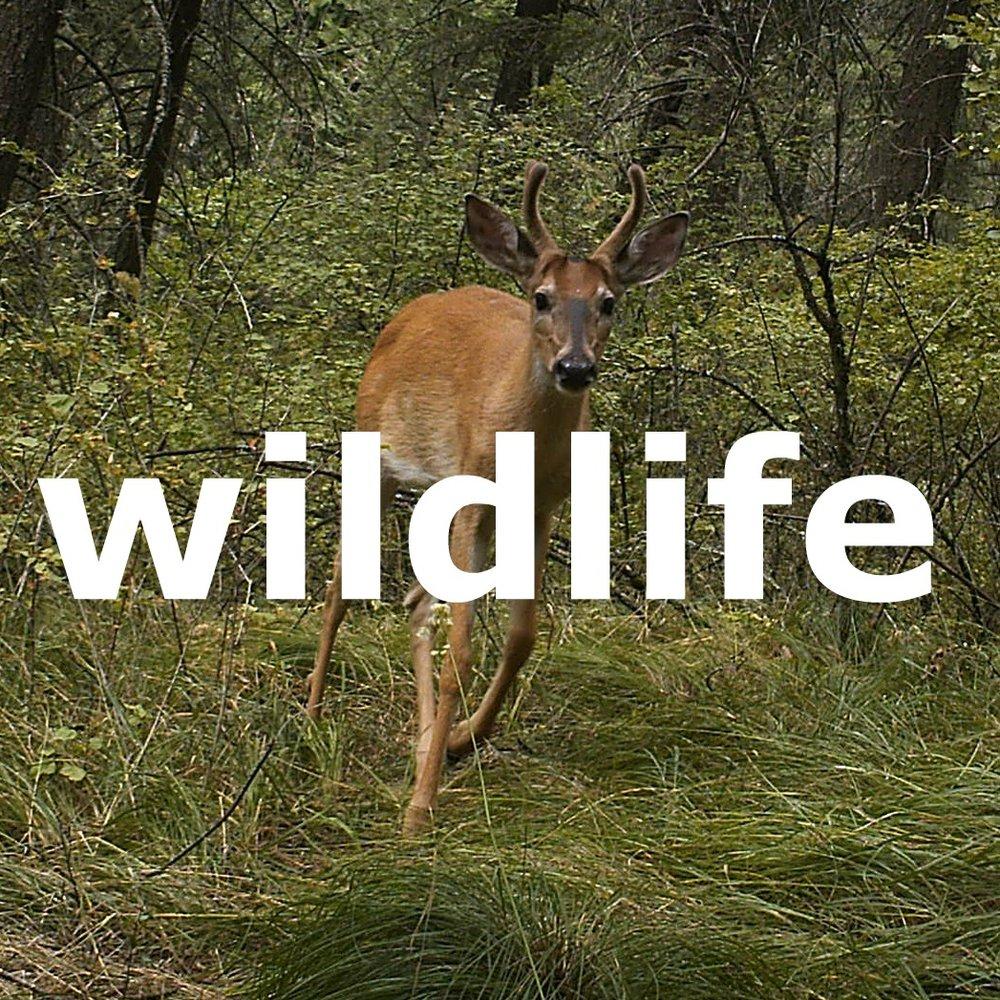 wildlife3.jpg
