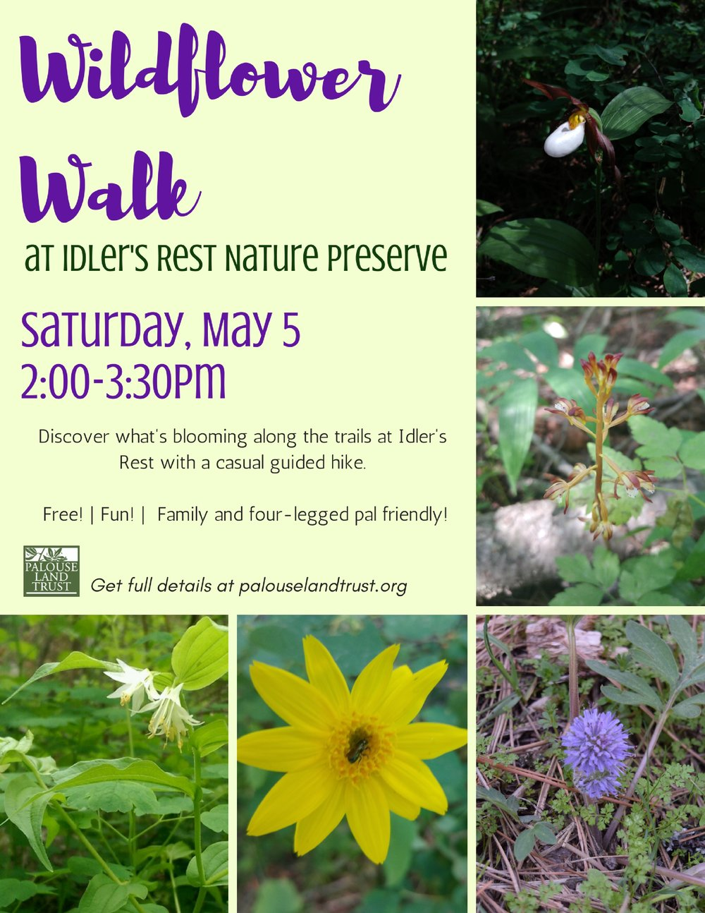 Wildflower Walk.jpg