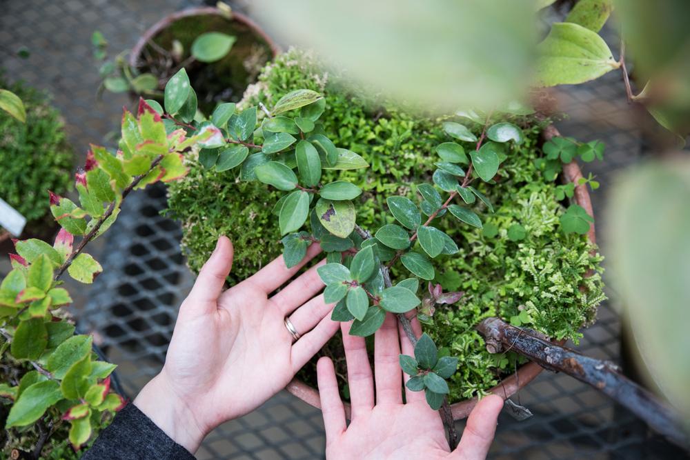 Woman's hands in greenhouse at Acadia University, Nova Scotia