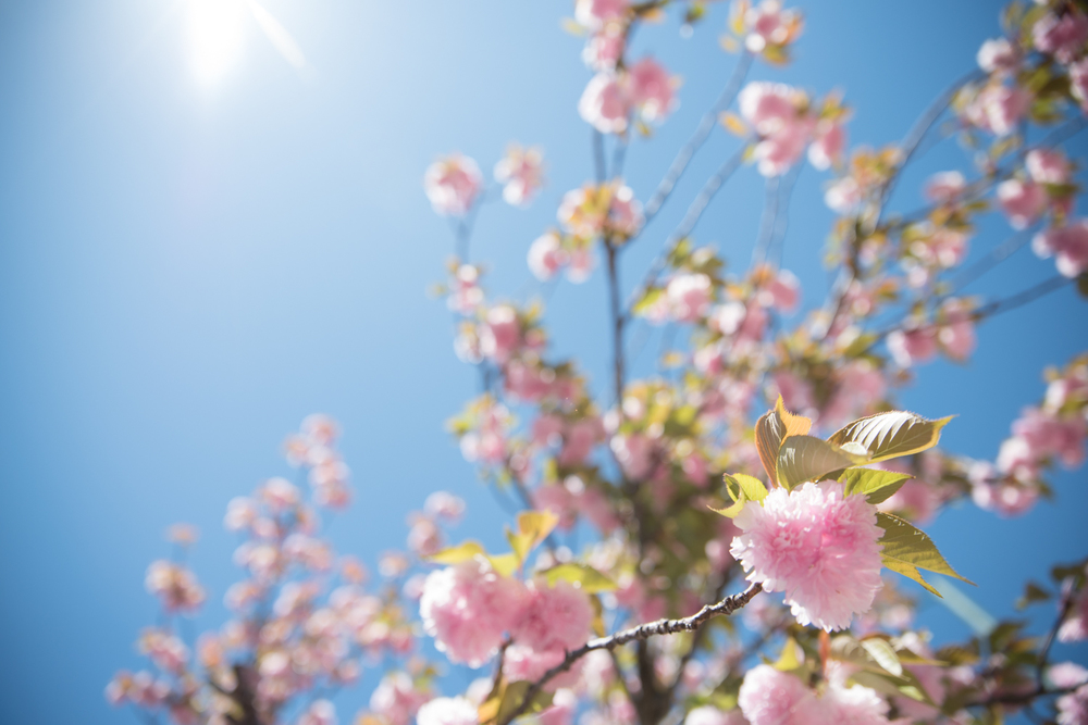 tree-flowers-chattanooga-tennessee