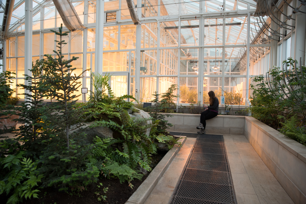 Woman in greenhouse at Acadia University, Woflville, Nova Scotia