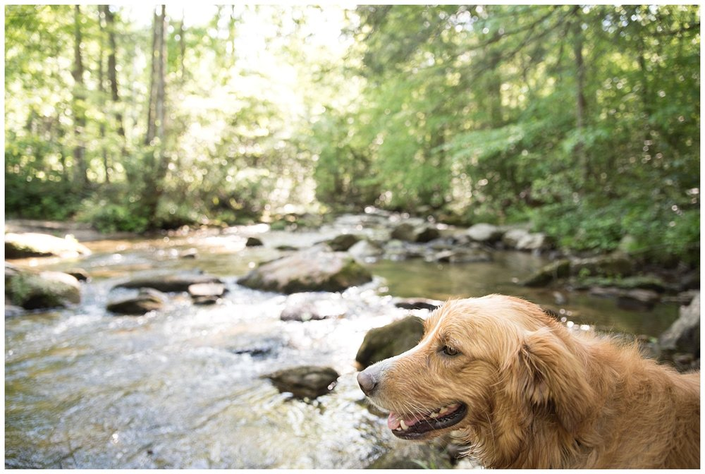 Scout at Jones Gap during one of our summer hikes!