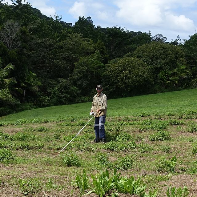 No stone unturned...no tree unplanted! Travis measuring out the new planting in the top paddock. #lunedesang #federal