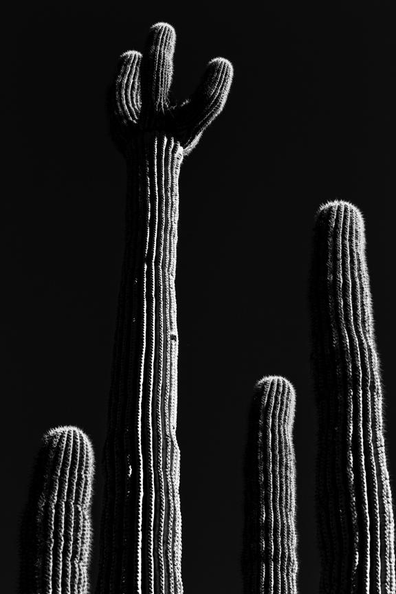 CactusSentinels-5.jpg