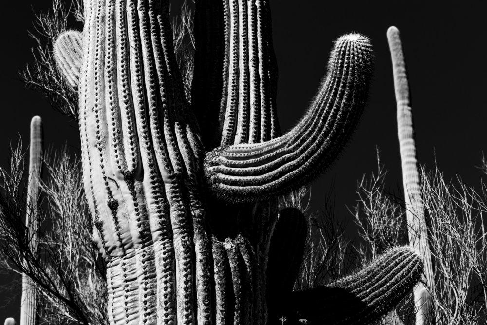 CactusSentinels-4.jpg