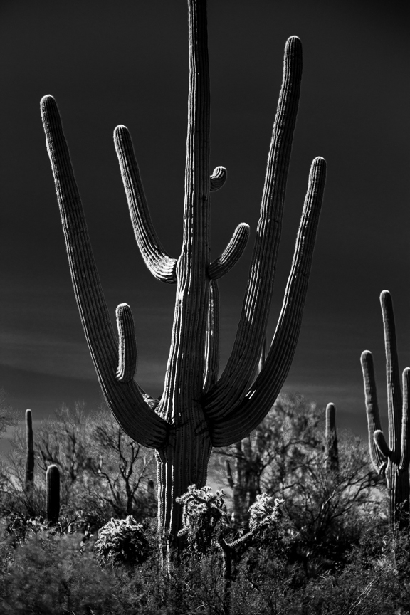 CactusSentinels-7.jpg