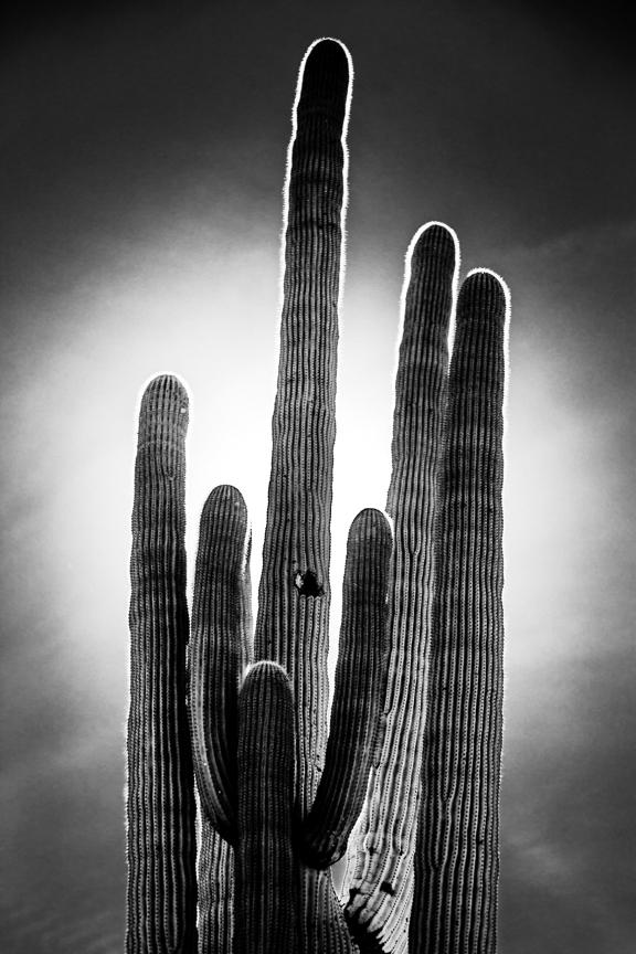 CactusSentinels-16.jpg