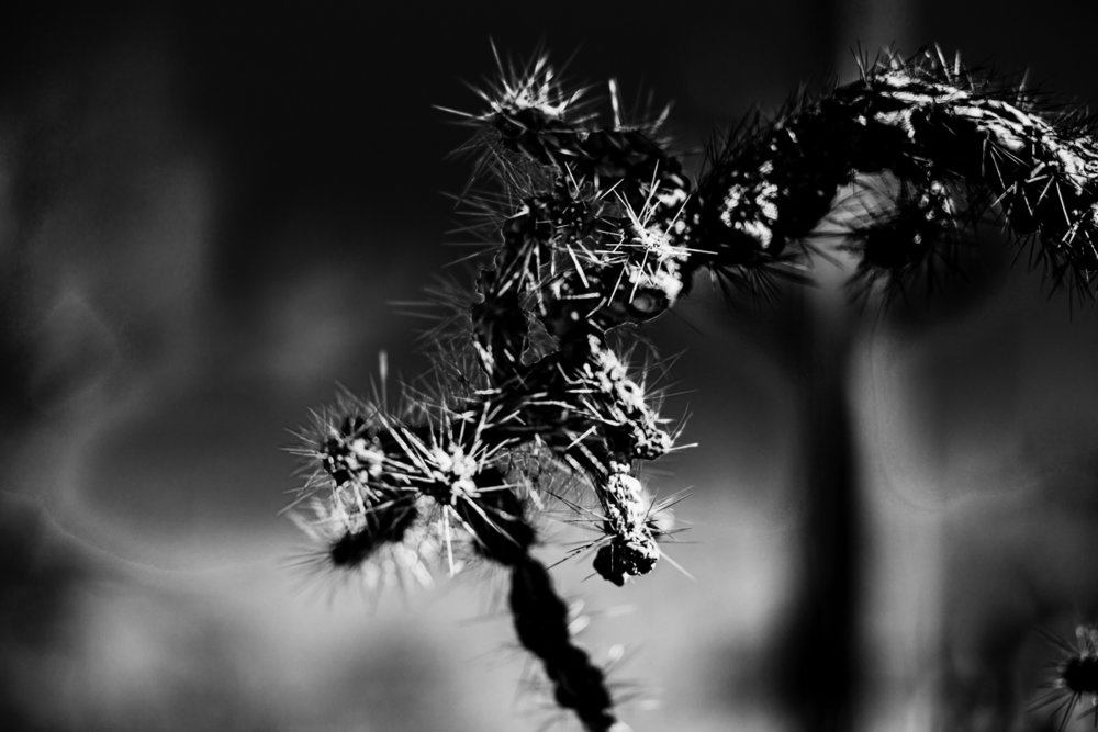 CactusSentinels-17.jpg