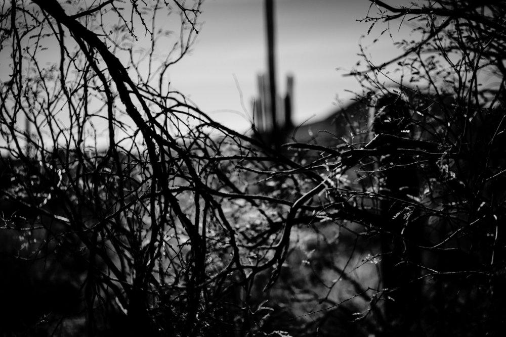 CactusSentinels-24.jpg
