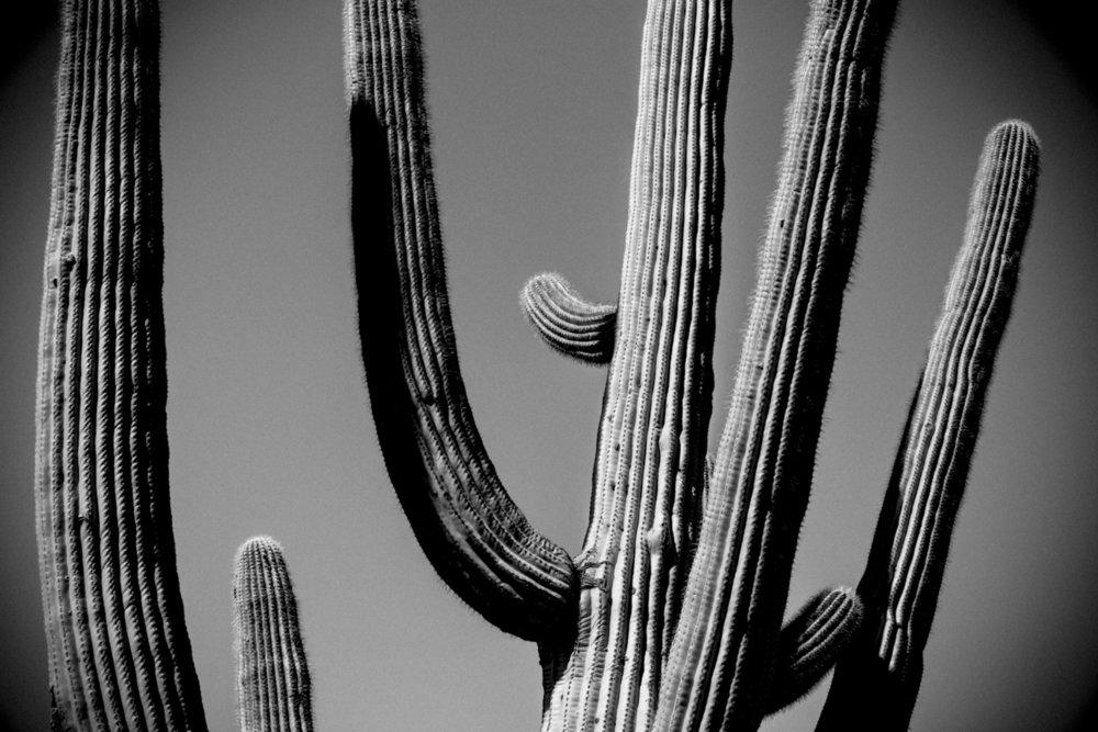 CactusSentinels-26.jpg