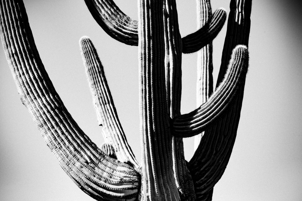 CactusSentinels-27.jpg