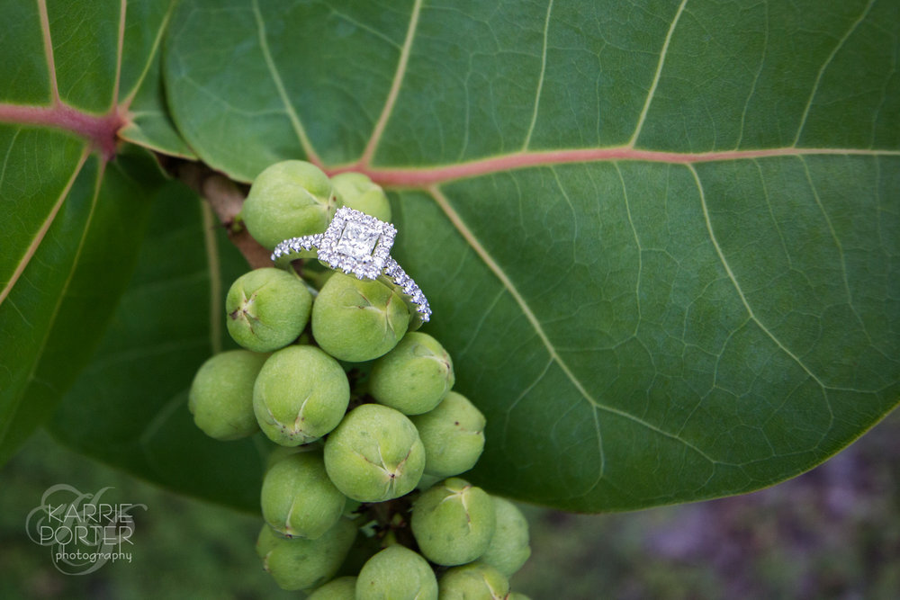 A wedding ring balances on a cluster of sea grapes during a Key West engagement portrait shoot