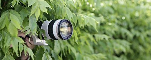 Camera in Bushes Narrow.jpg