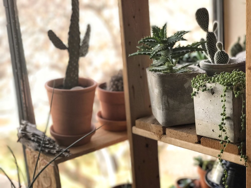 CEMENT PLANTERS WITH SUCCULENTS
