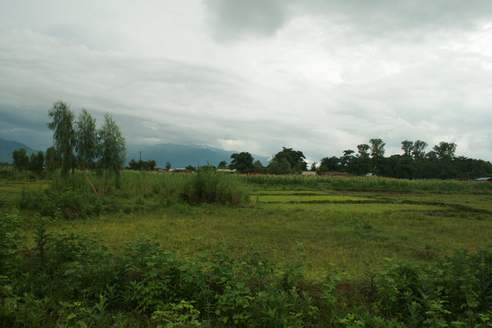 A field near Nsondole.