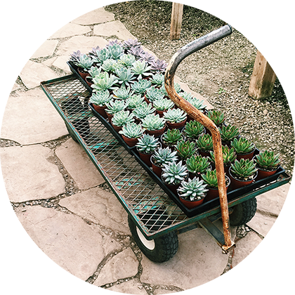 Shopping + Installation - Keeping in mind the ideal conditions + design elements for the longevity of your plants, we can personally shop + install greens to help you connect plants to your space.