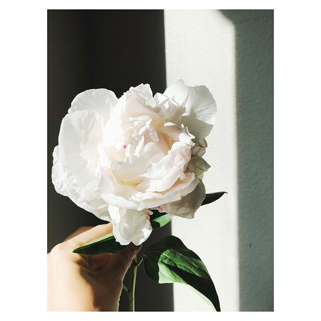 holding onto every last peony and every drop of sunlight 〰️