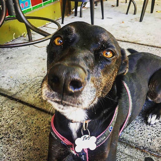 Our dog of the week is Jazz.  Jazz loves treats and snuggles.  #butcherbirdcafe #dogoftheweek #dogsofinstgram #petershamsoriginaldogoftheweek
