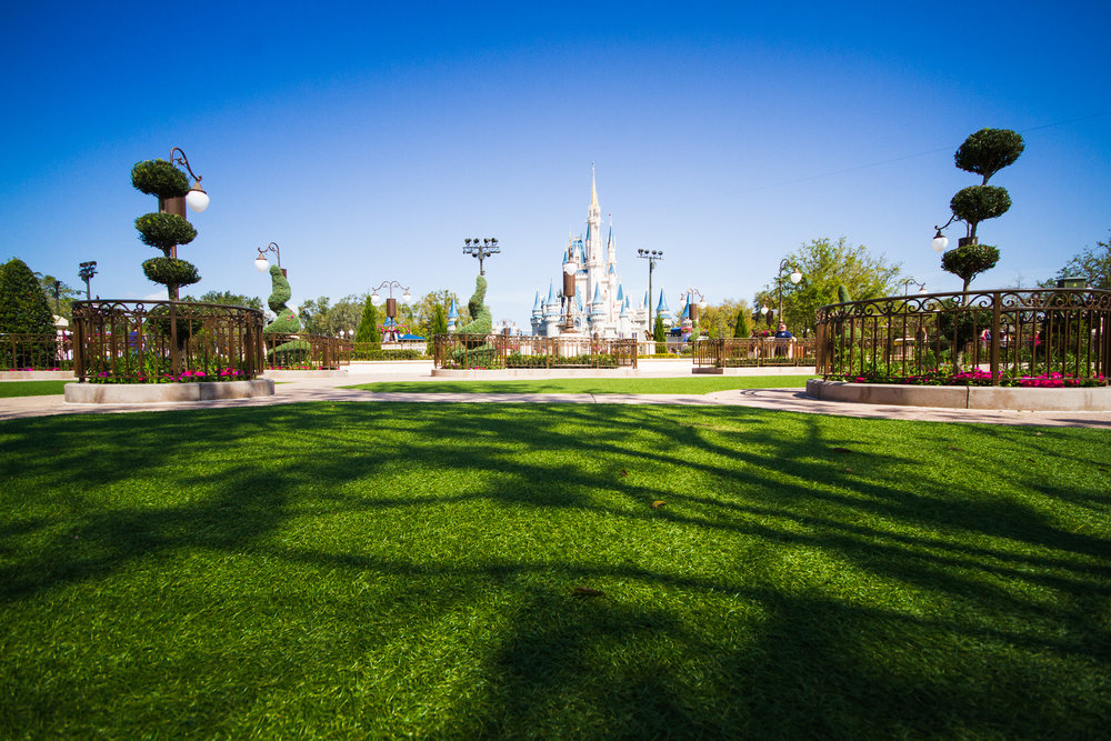 disney world photographer / hub grass and chill