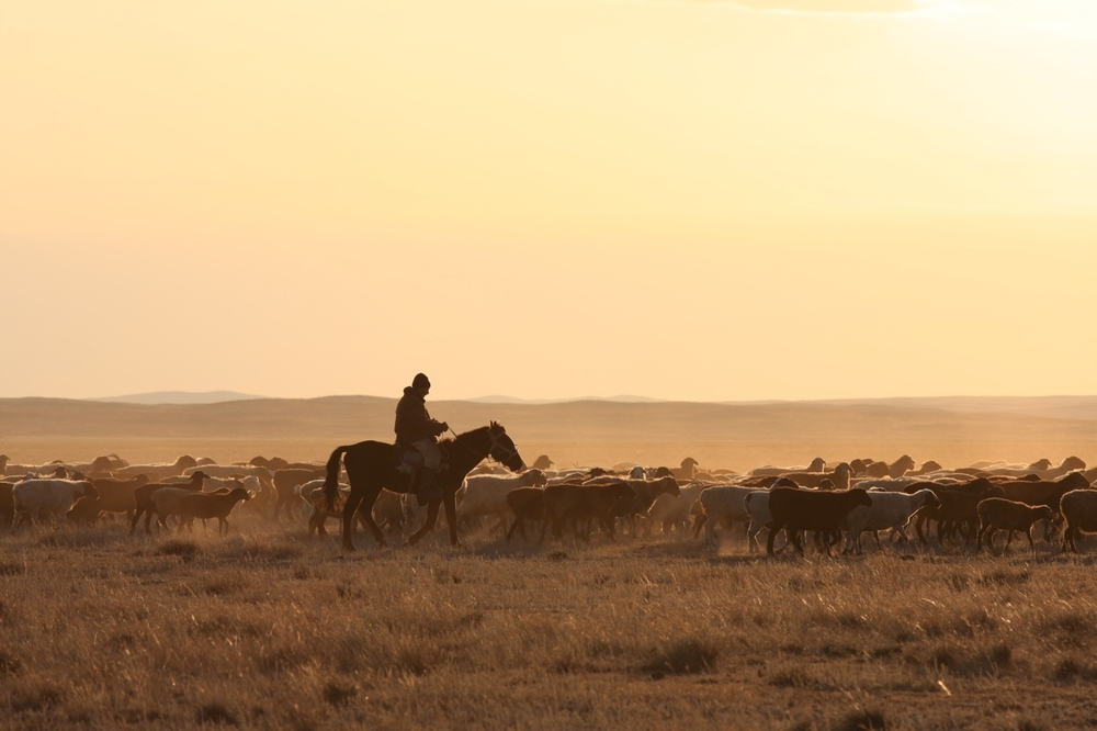 A shepherd with his flock in Kazakhstan from the feature documentary  Silent Bombs: All For The Motherland (2009). (Winner Best Director Yorkton Film Festival 2009).
