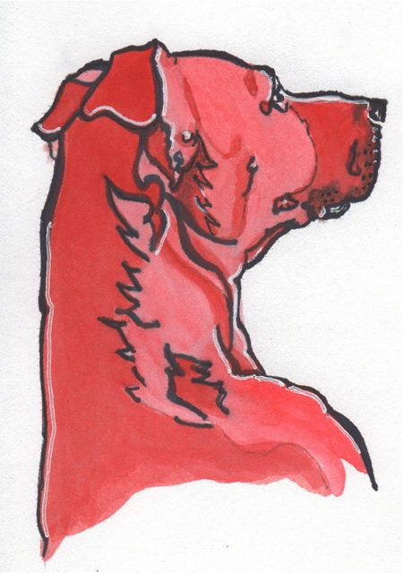 Red Dog Pictures