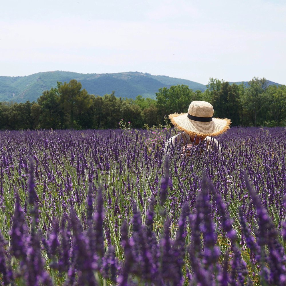 Provence is an immersion into the soul and the senses.... -