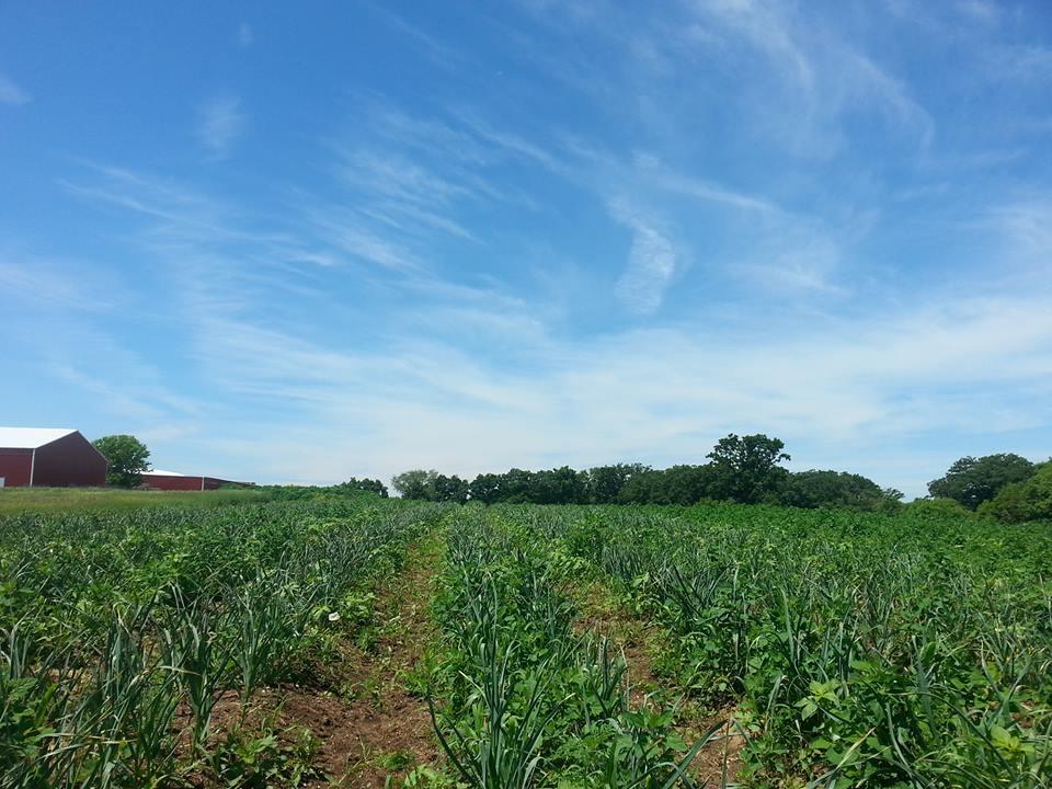 FARM (WI)