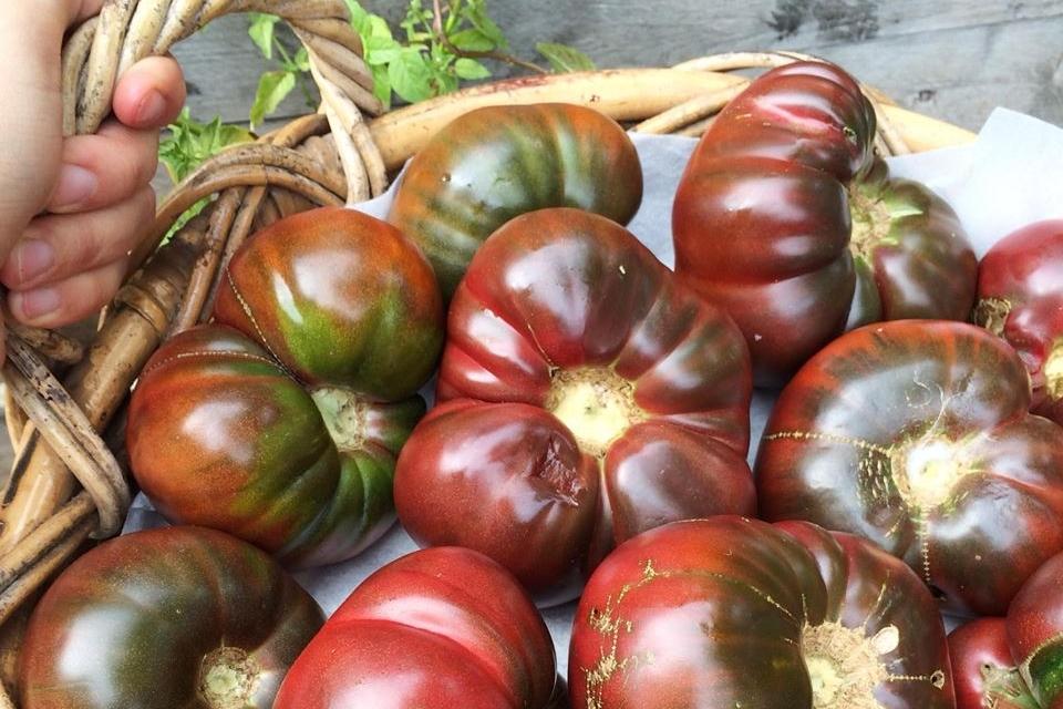 rvr-tomatoes.jpg