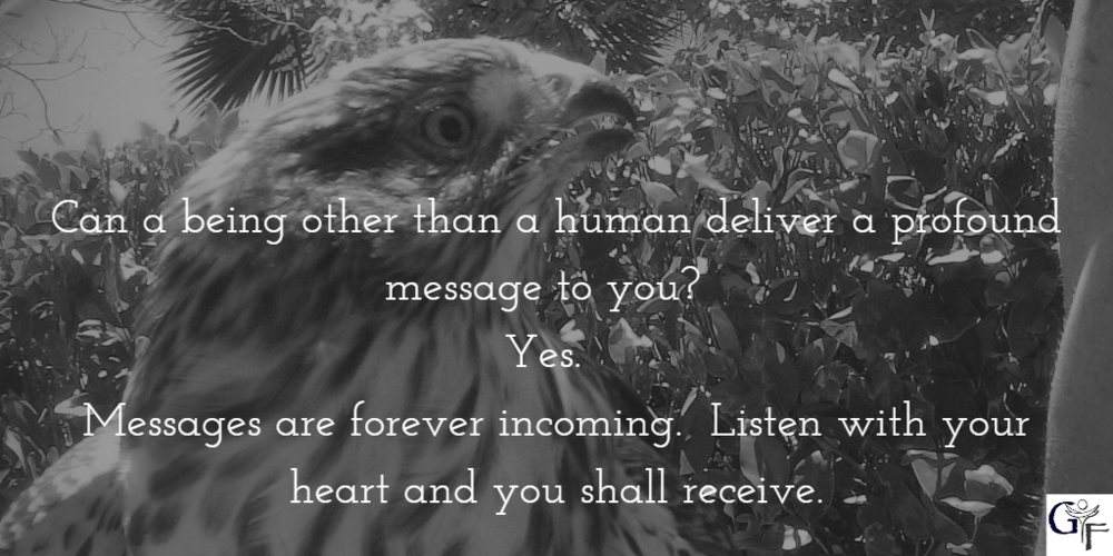 hawk message.png