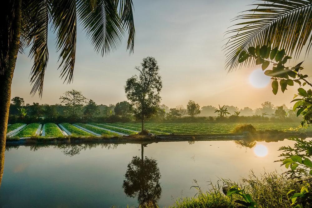 sun-and-rice-fields.jpg