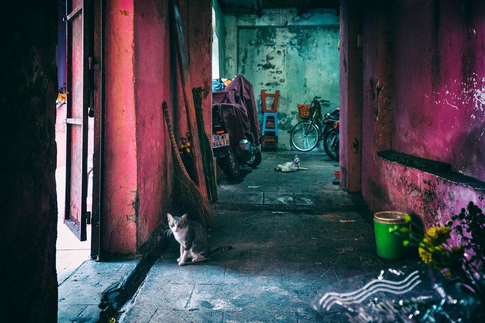 cat-in-door.jpg