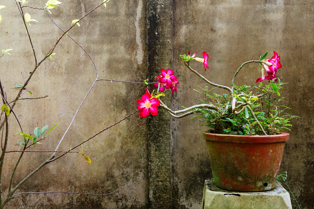 plant-against-wall.jpg