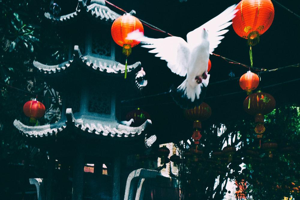 white-pigeon-flying.jpg