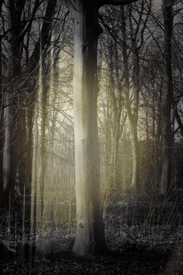 z_forest light_c_2030_e.jpg