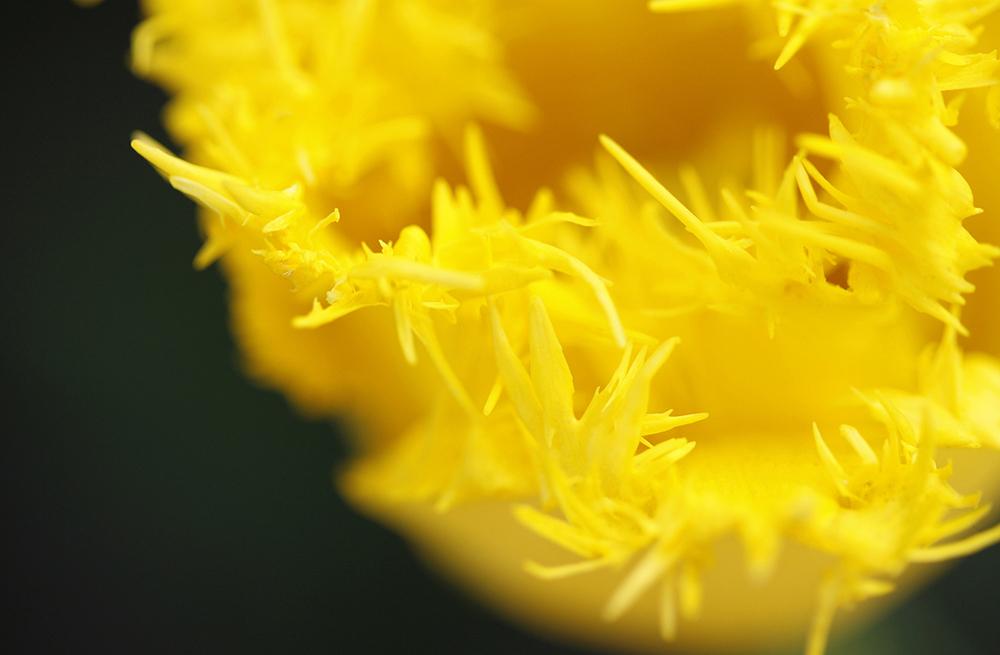 flower_5_25_38.jpg