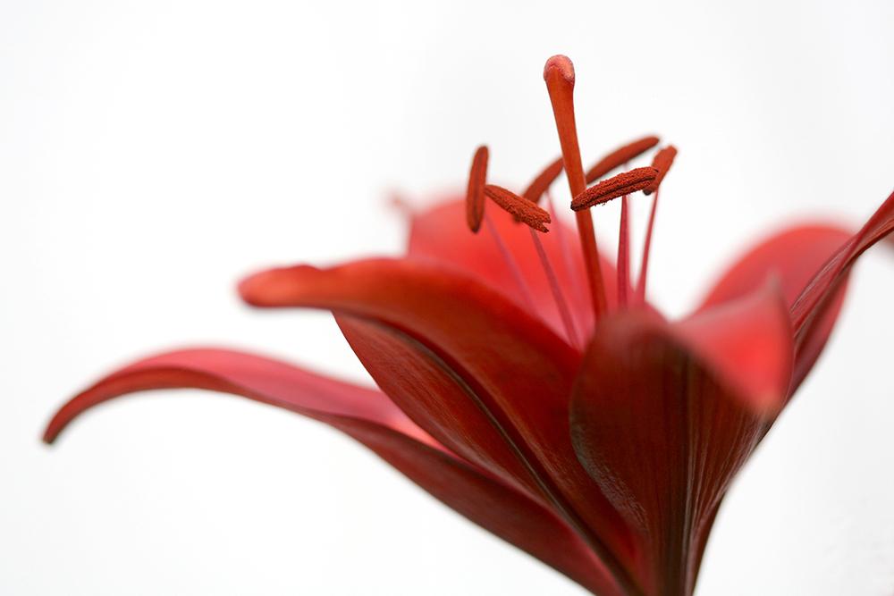 flower_26.jpg
