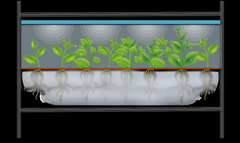 aeroponics.png