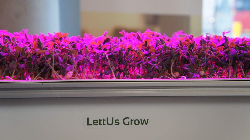 Our aeroponic greens on show in Borough Market, London Food tech week.