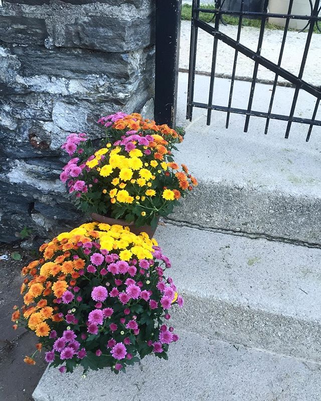 Love these multicolor mums. 😊🍂🍁#fall #mums #home #homedecor