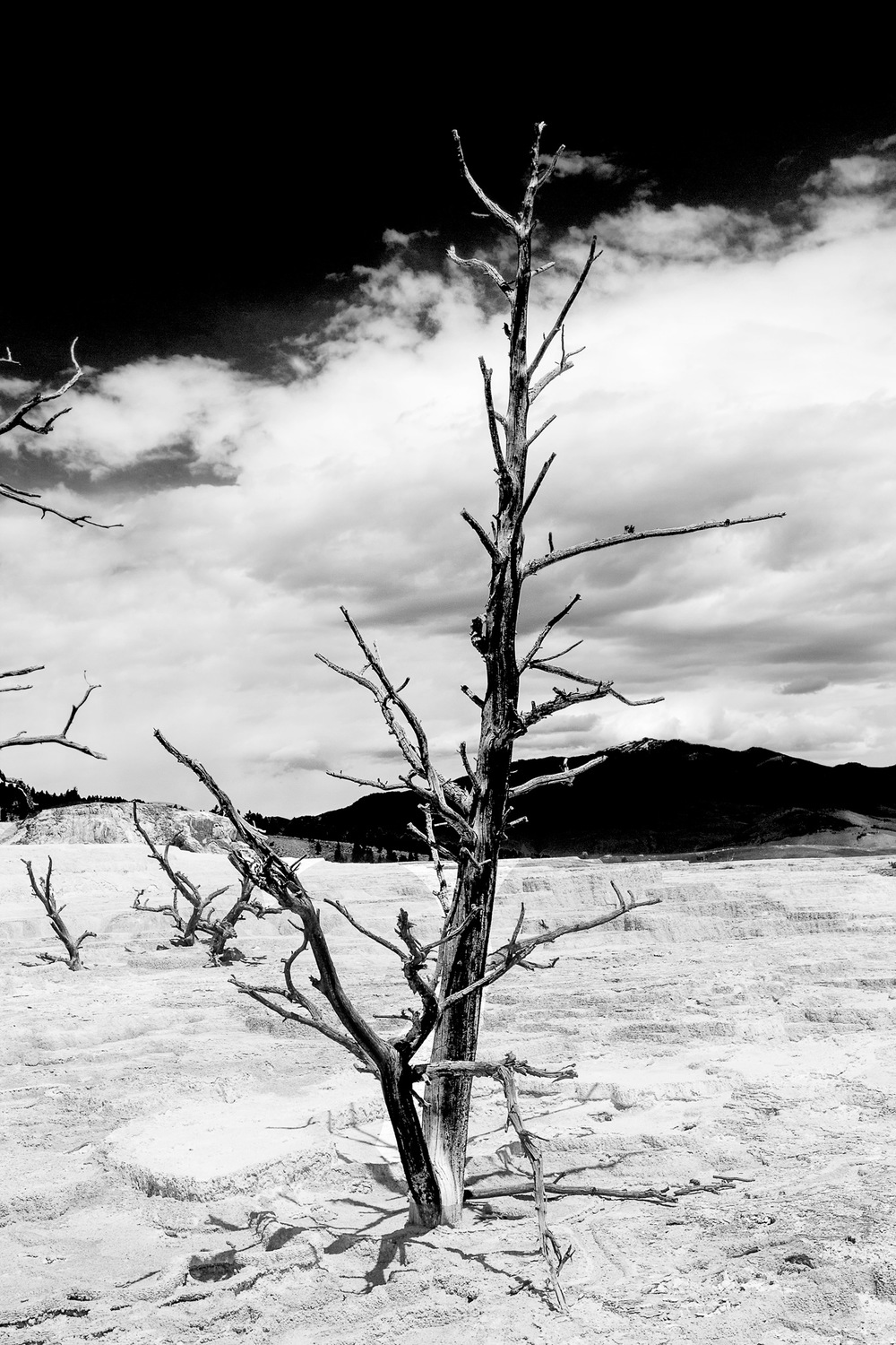 Dead-Tree---Yellowstone.jpg