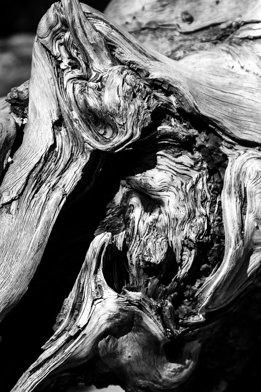 Driftwood - Yellowstone - B&W.jpg