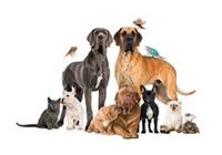 Rações para Animais