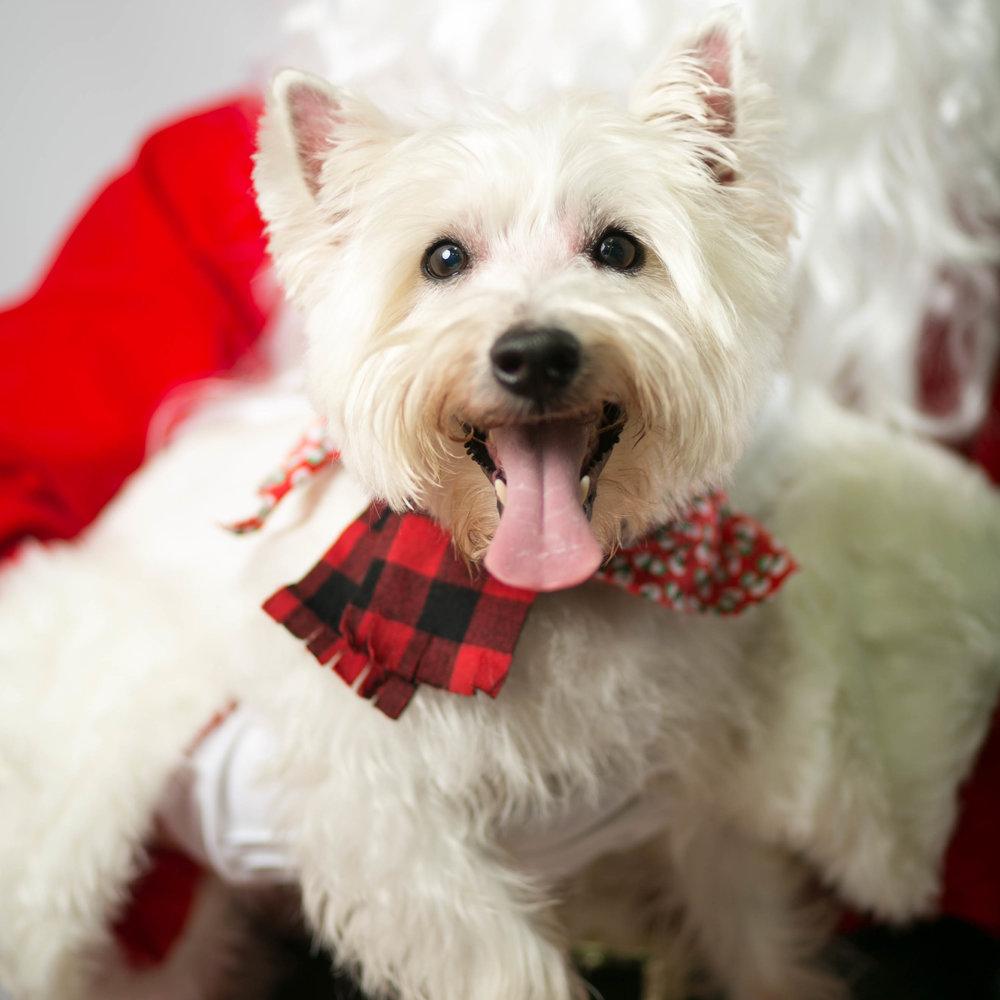 Philadelphia, PA, Puppy Christmas!201612180259.jpg