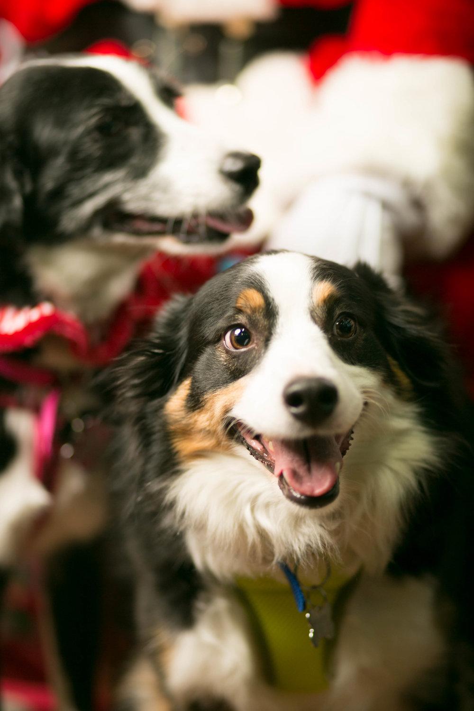 Philadelphia, PA, Puppy Christmas!201612180260.jpg