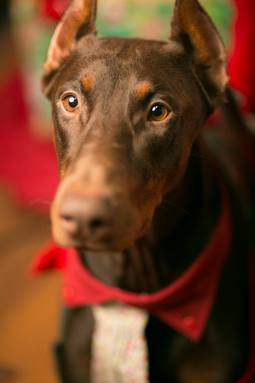 Philadelphia, PA, Puppy Christmas!201612180262.jpg