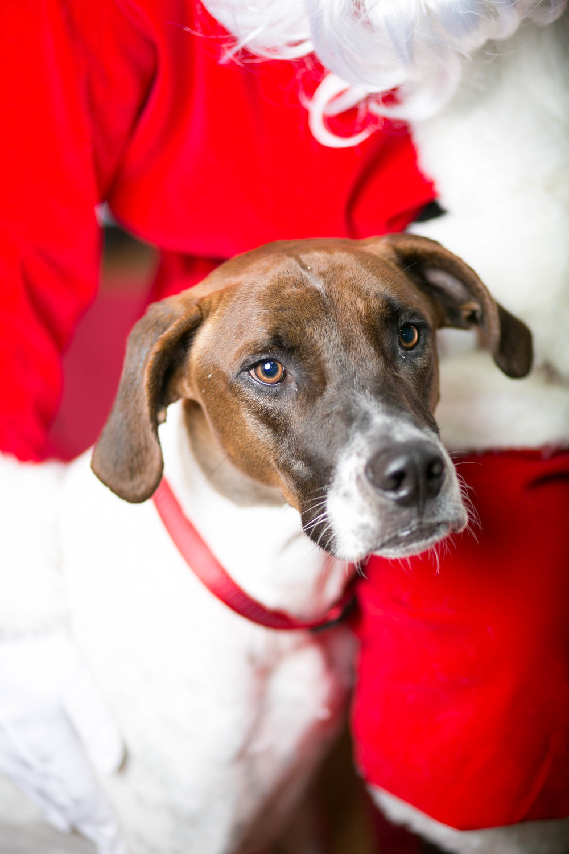 Philadelphia, PA, Puppy Christmas!201612180261.jpg