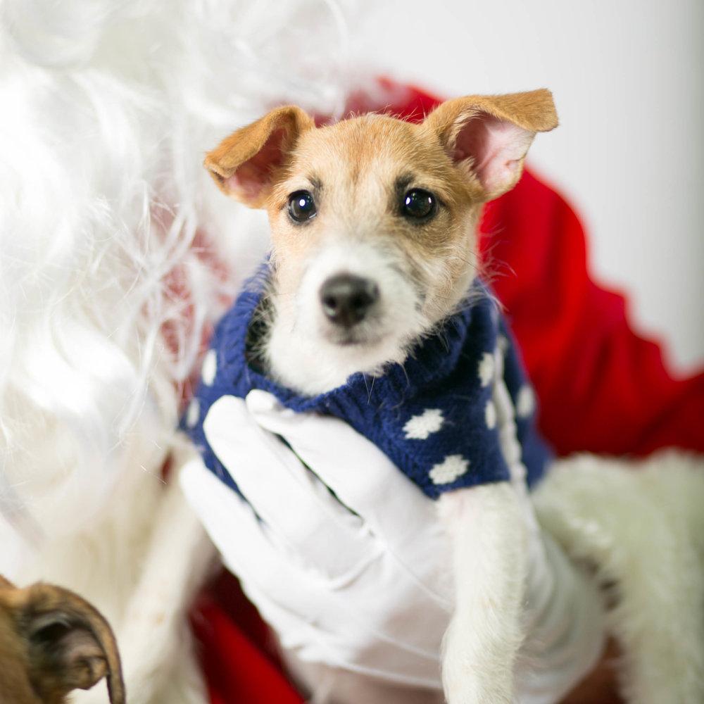 Philadelphia, PA, Puppy Christmas!201612180263.jpg