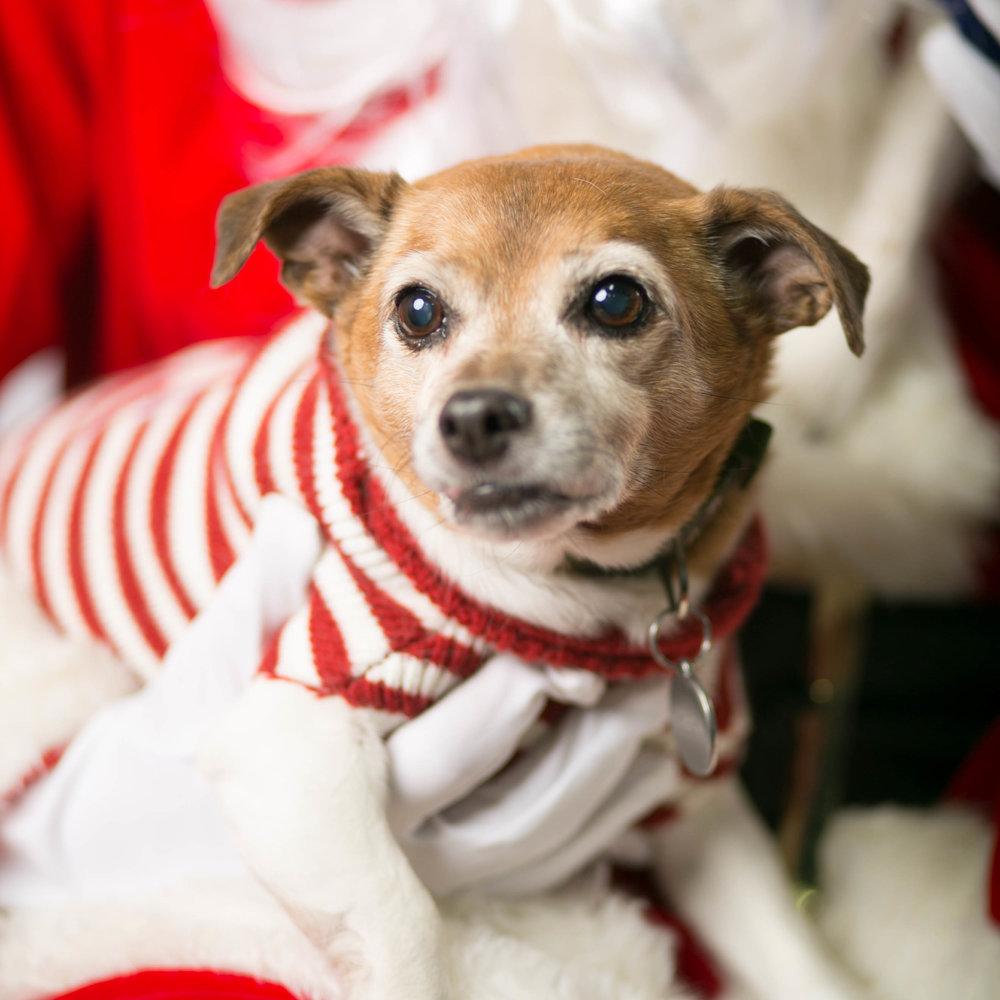 Philadelphia, PA, Puppy Christmas!201612180264.jpg